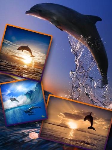 Красивые Дельфины (подборка изображений)