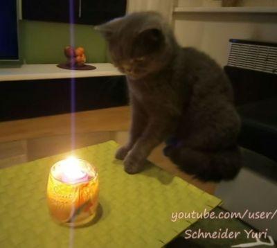 Этот кот просто обожает вкус своей обгоревшей шерсти