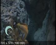 Сочинский океанариум (2013) DVDRip