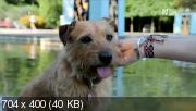 Спасение собак [1 сезон: 1-10 серии из 10] (2013) SATRip