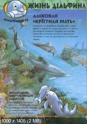 Удивительный мир животных. Дельфины (2003) PDF