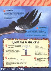 Удивительный мир животных. Орлы (2004) PDF