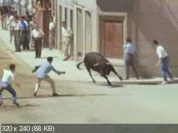 Собачий мир (1962) DVDRip от MediaClub {Android}
