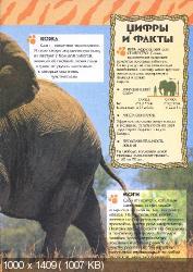 Удивительный мир животных. Слоны (2003) PDF