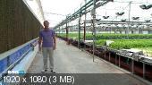 Сад-гигант (RTGHD) (2013) HDTV 1080i