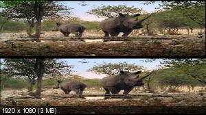 Африканское сафари 3D / African Safari 3D ( by Ash61)  Вертикальная анаморфная