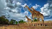 Фото разных животных