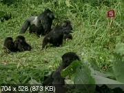 Борьба за выживание (Разрушенное царство. Горная горилла) (1994) SATRip