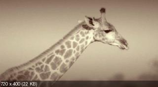����� ���������. ������� ���������� ���� / David Attenborough's Natural Curiosities [1 �����] (2012) WEB-DLRip �� CSS