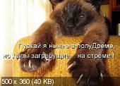Позитивные котэ 25.10.14