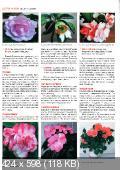 Домашние цветы (№10 / 2014)