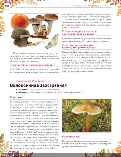 Лекарственные грибы. Большая энциклопедия (Михаил Вишневский) [2014, Народная медицина, грибы, PDF]