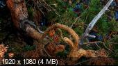 http://i64.fastpic.ru/thumb/2014/1211/96/_cb383fc98e336aed3904d3819dc73496.jpeg