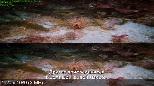 На глубине / Into the Deep [IMAX] (1994) BDRip 1080p | 3D-Video | halfOU | Рус.Субтитры