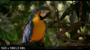 Амазония: Инструкция по выживанию / Amazonia (2013) BDRemux 2D/3D 1080p | 3D-Video