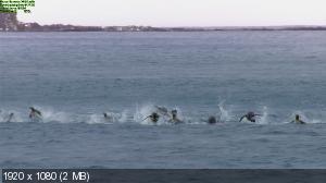 Императорские пингвины Пен-И и Сом-И / Слёзы Антарктики / Tears of the Antarctic (2012) BDRemux 2D/3D 1080p | 3D-Video