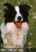 Валери Драмар, Лаетита Барлерин - Расшифруйте язык вашей собаки. Позы, лай, метки... (2014)