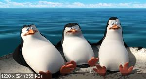 Пингвины Мадагаскара / Penguins of Madagascar (2014) BDRip 720p | DUB | Лицензия